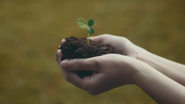 Dívka drží zelených rostlin s půdou ve svých rukou - kamery na posuvník