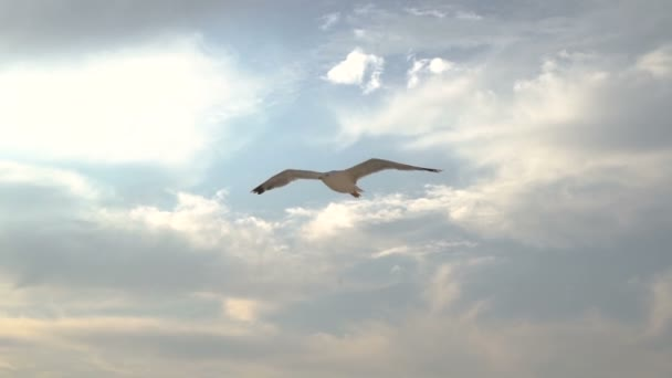 Seagull soaring against Beautiful, heavenly sky with clouds