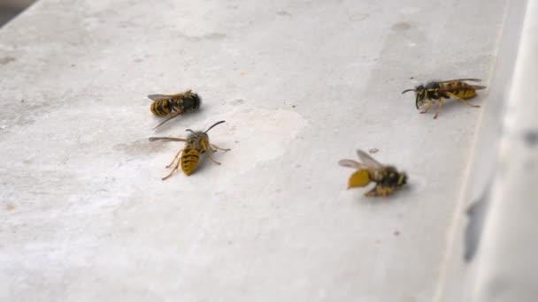 Mehrere tote Bienen auf einem weißen Fensterbrett. Zwei von ihnen leben noch. Die Insekten wurden mit einem Putzmittel vergiftet.
