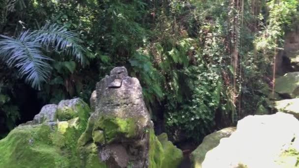 Pohled na zelenou zahradu u sloního jeskynního chrámu Goa  ajah nedaleko Ubud, Bali, Indonésie, 4k záběr video