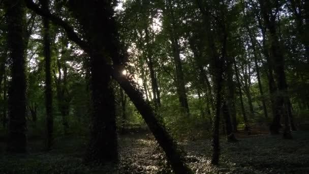 Zelené lesní břečťany sluneční svit přes stromy
