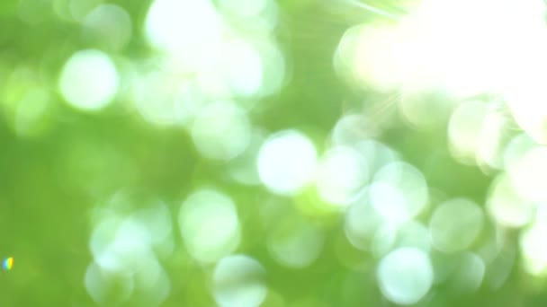 Defocused bright summer sunny green background with bokeh and glares. Summer warm afternoon in canopy of trees