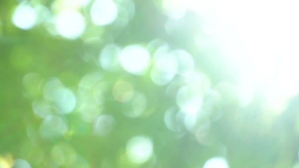 Proměnný rozostření jasné letní Slunečné zelené pozadí s bokeh a odsuzujícím pohledům. Letní teplé odpoledne v korunách stromů