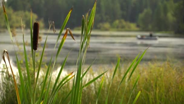 A halász horgászbottal horgászik egy felfújható hajóról a folyó fenekén. Hétvégi hobbi. Nyugodt nyári táj. Nyári fülledt délben az erdei tó partján. 4k videó