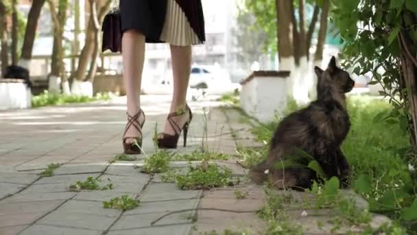 woman in ankle boots and beige pleated skirt walks near cat