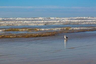 Early morning on the sandy beach near Essaouira, Morocco