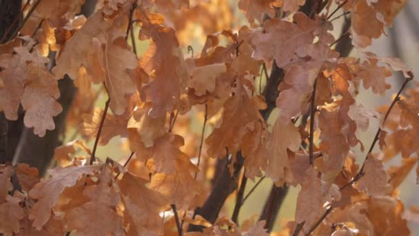 Oranžové dubové listy na větvi