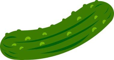 Fresh Cucumber illustration