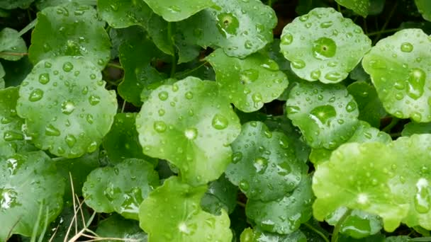 green leaf with drop of rain water with green background. green nature for freshness background