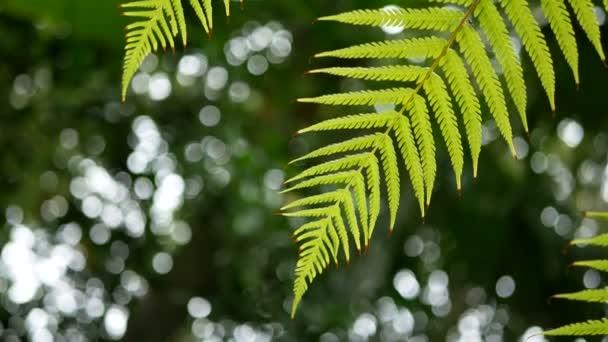 4k. Green Fern levelek lenget a szél, zöld fa háttérrel és bokeh fény és fa padló. zöld természetes háttér másolási tér felvételeket, szelektív összpontosítani mély területen