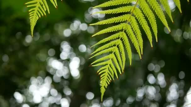 4k. Green Fern levelek Sway a széltől a zöld fa háttere és bokeh fény. zöld természetes háttér másolási tér felvételeket, szelektív összpontosítani mély területen