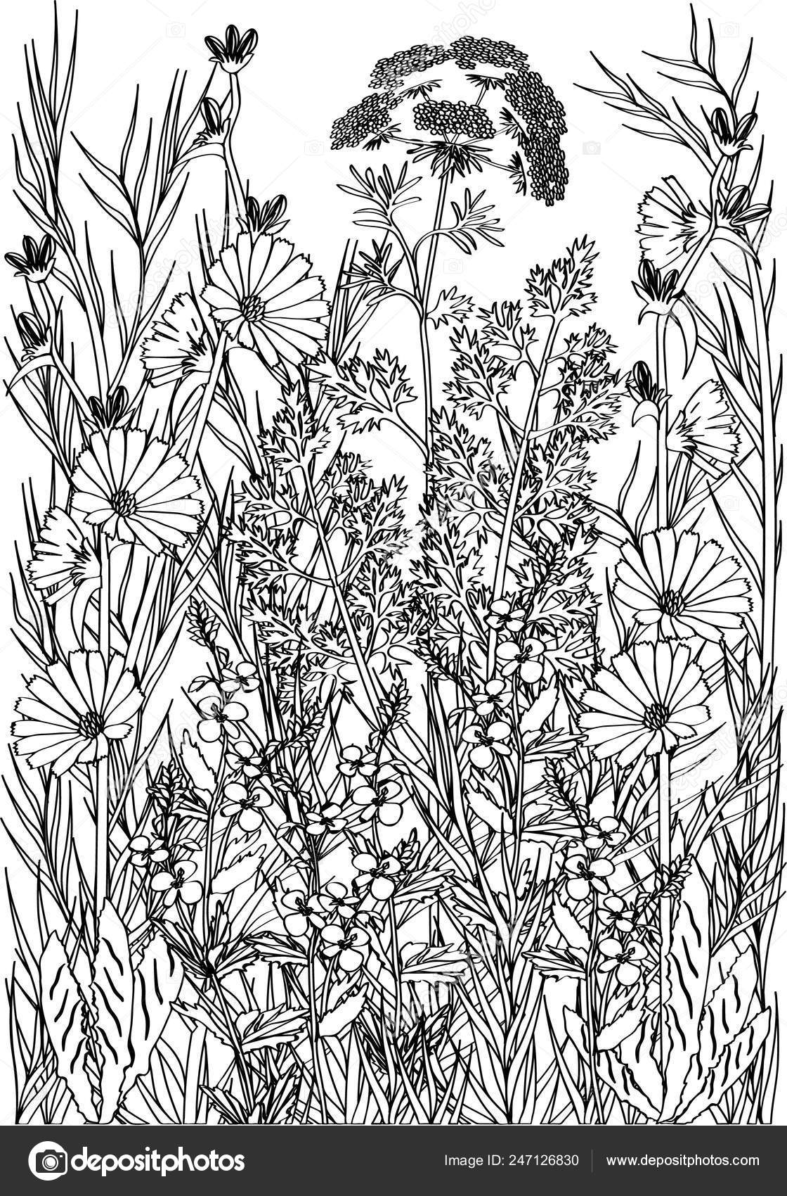 Coloring Page Flowers Plants Meditation — Stock Vector ...