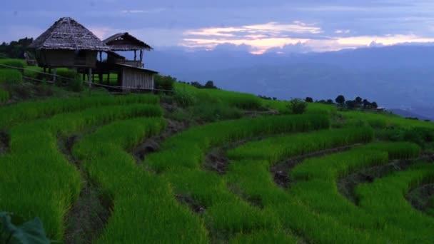 Reisterrassen in Nordthailand