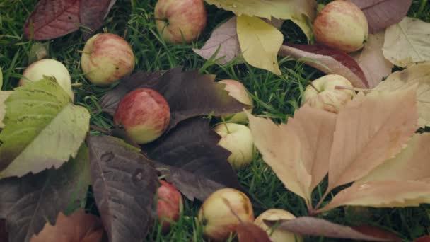 Érett piros Alma esett az almafa alatt