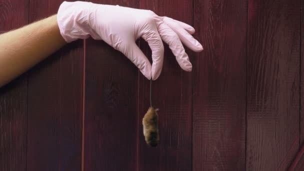 Eine tote Maus in der Hand