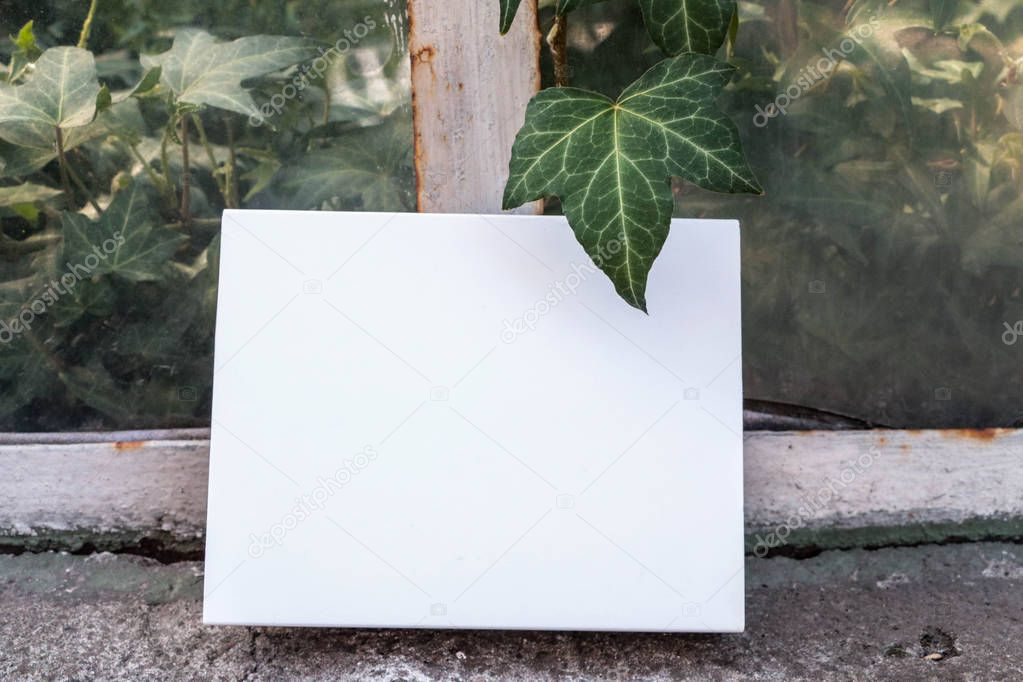 White notepad for layout. The book is on the old window. Plant, ivy on white paper.