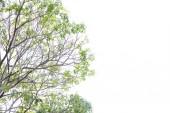 Rami e foglie verdi su sfondo bianco, isolato