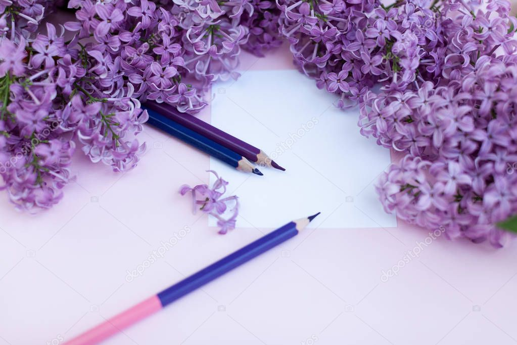 Sheets of white clean paper and spring flowers lilac, on a pink background.