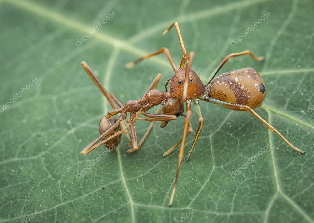Closeup of bugs sitting on green plant leaf