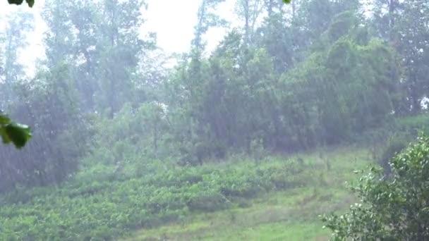 Rainfall on the trees