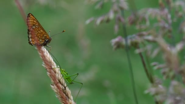 Grasshopper and Butterfly in touch