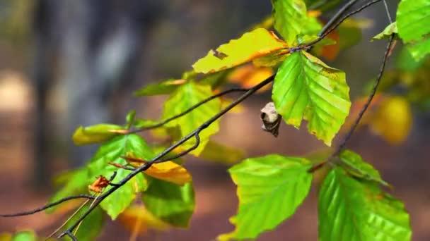 podzimní listí ve větru
