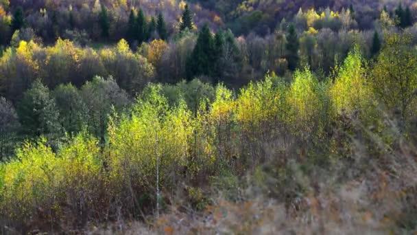 Bříza v podzimní vítr