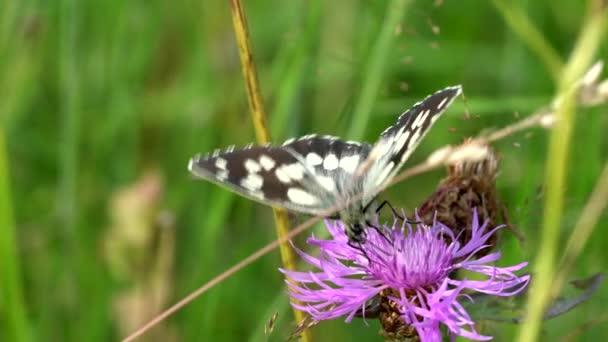 pillangó a fűben