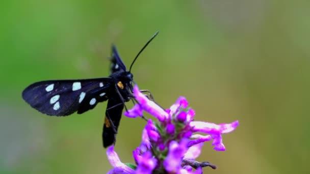 Pillangó a vad virág