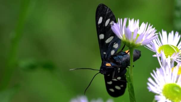 Motýl na polní kvítí