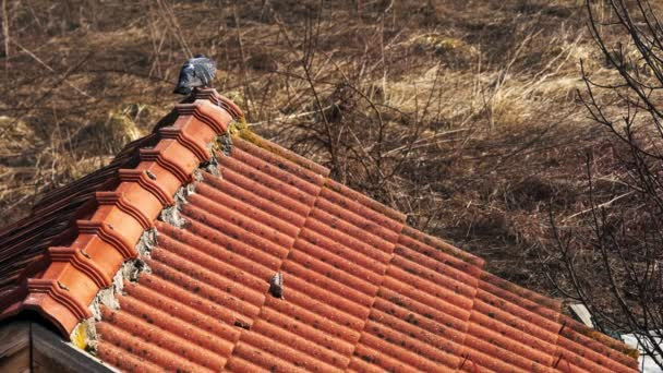 Holubi na střeše ve venkovské krajině