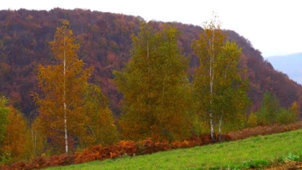 Birch in the autumn landscape