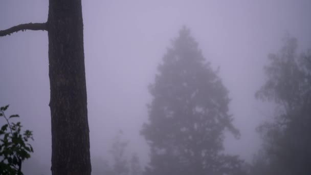 Dense fog in the forest