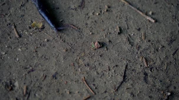 Šnek - Gastropoda pomalu pokračuje