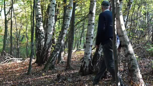 Člověk prochází březový les