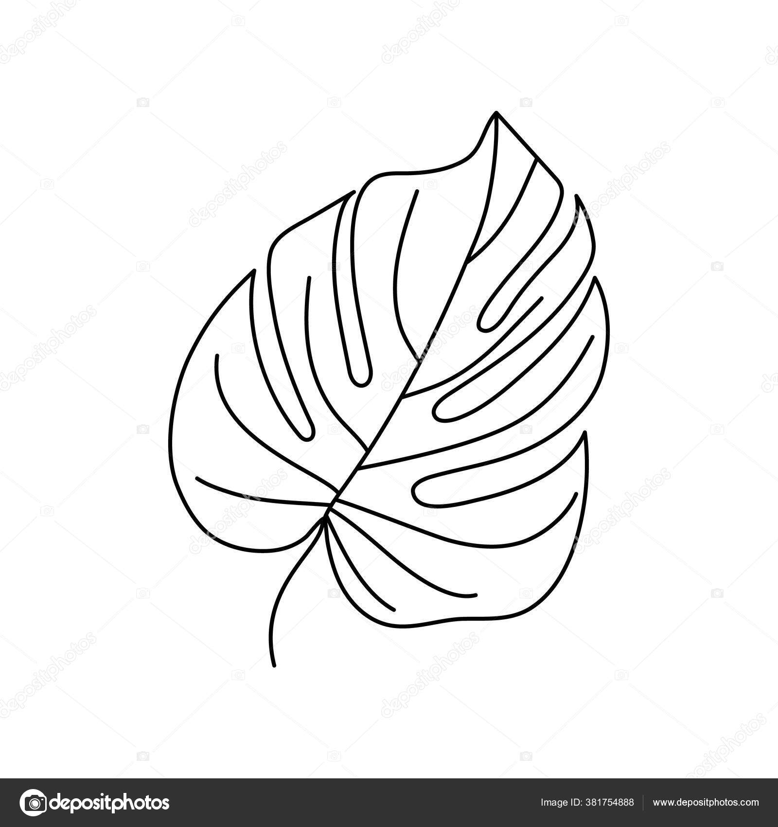 Monstera Leaf Of Tropical Plants Outline Palm Leaf In A Trendy Minimalist Liner Style Vector Illustration Stock Vector C Sini4ka 381754888 Vector leaf, outline drawing in vintage style. https depositphotos com 381754888 stock illustration monstera leaf of tropical plants html