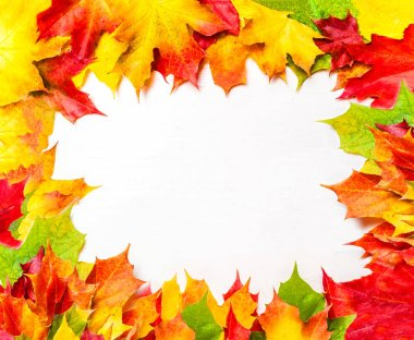 Autumn frame with colorful Marple leaves on white background