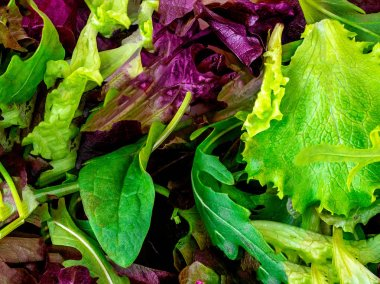 Salad mix leaves background. Fresh Salad Pattern with rucola, pu