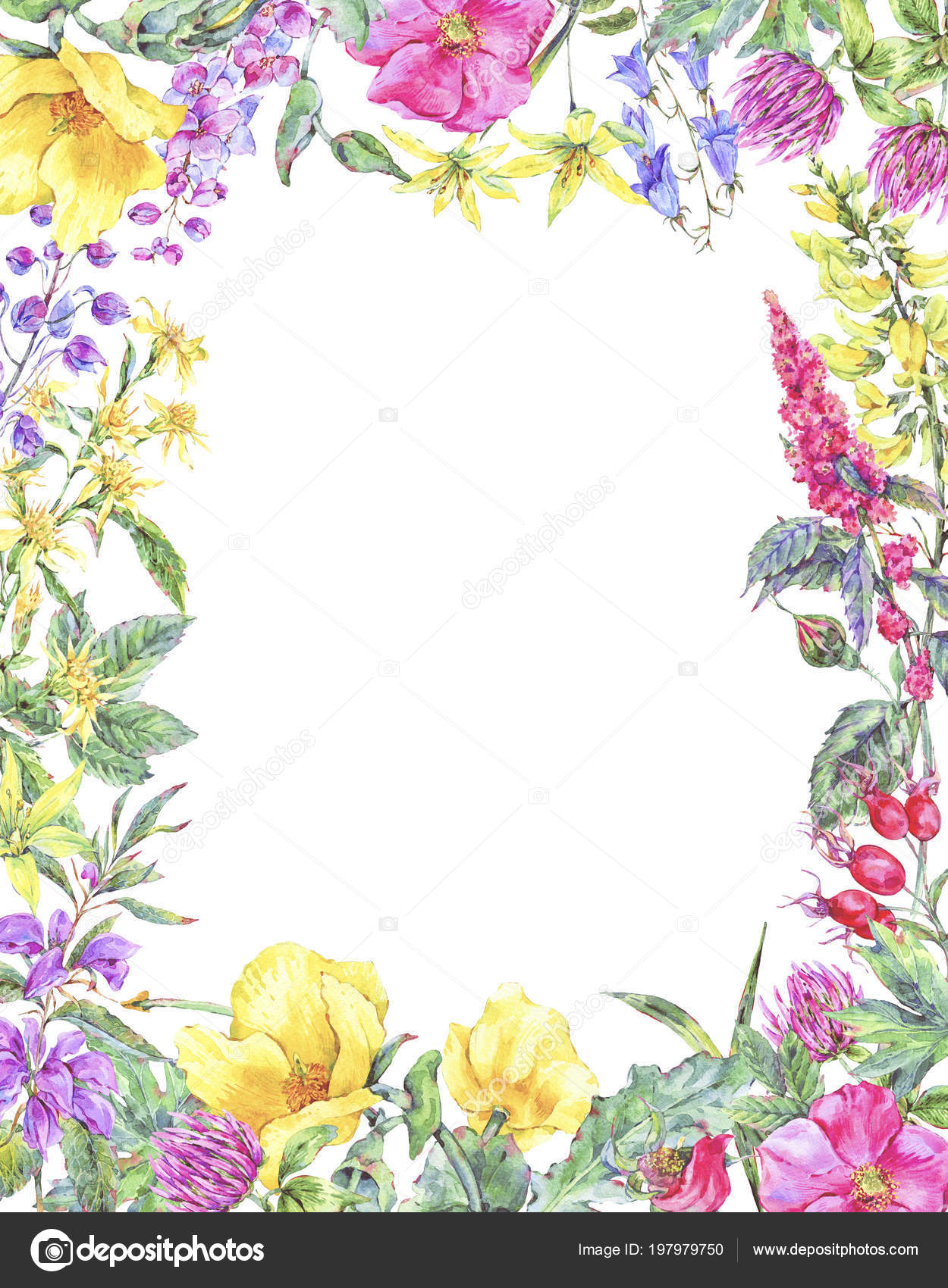 Watercolor summer medicinal floral vertical frame, Wildflowers plant ...