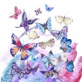 Akvarel starožitný průkaz, ultrafialový motýl