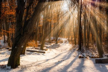Beautiful winter sunset with trees in the snow and rays of sun