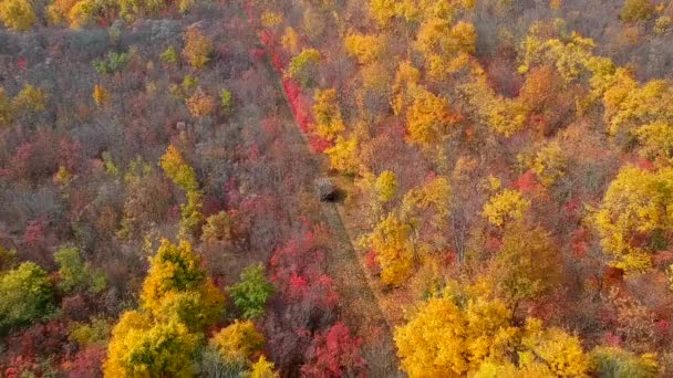 Autumn forest from the sky