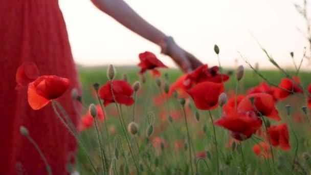 Zblízka, pomalý pohyb, dívka v červených opalových šatech jí pomalu vede ruku přes máky na makím poli při západu slunce