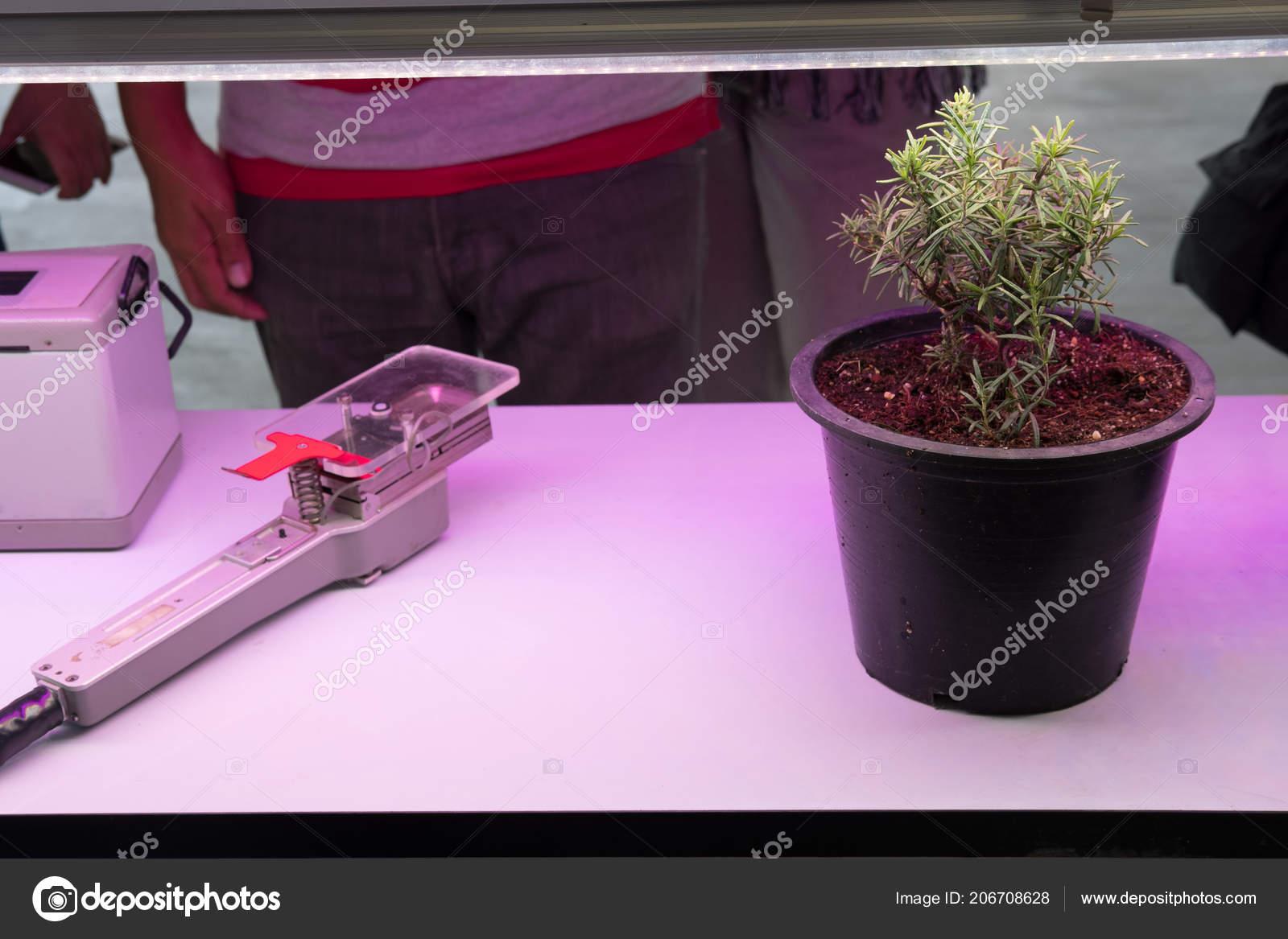 Avec Smart Intérieur Plante Led Ferme Lumière Dans Poussant Pnw0OXk8