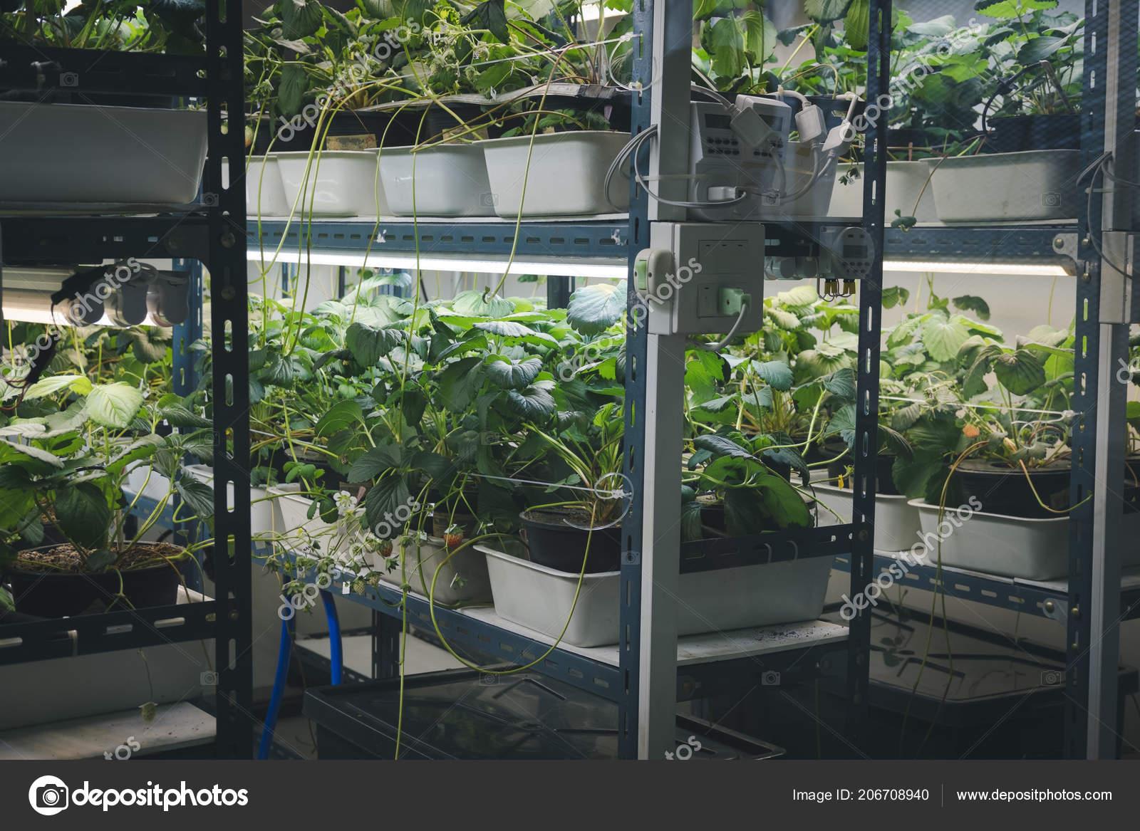 Intérieur Avec Led Poussant Lumière Ferme Smart Dans Plante xerdCBo