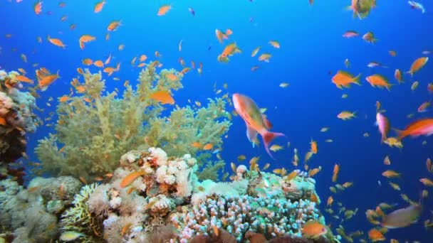 Colorful Ambience Fish