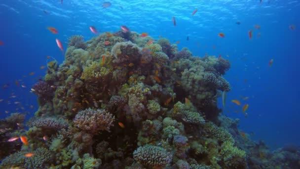 Coral Reefs Seascape
