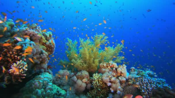 Barevné zobrazení pod vodou