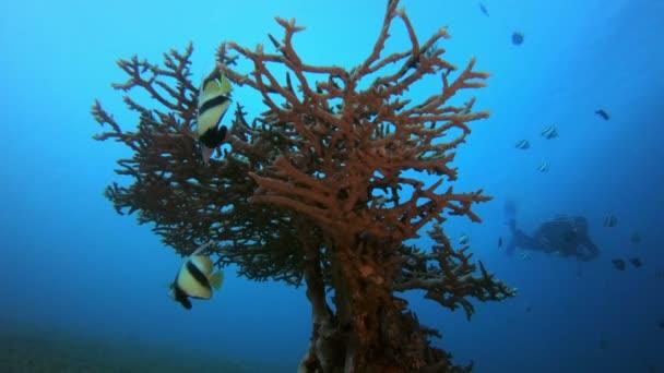 Immersi su banner subacquei Pesce e subacqueo