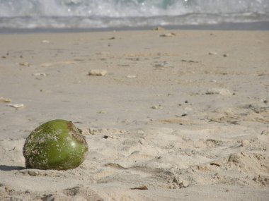 Coconut at the beach in White Beach, Baru Island, Colombia.